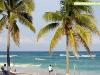 Las palmeras en Playa del Carmen