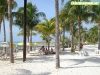 Palmeras en Playa Norte