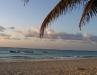 Preciosas palmeras de Playa del Carmen